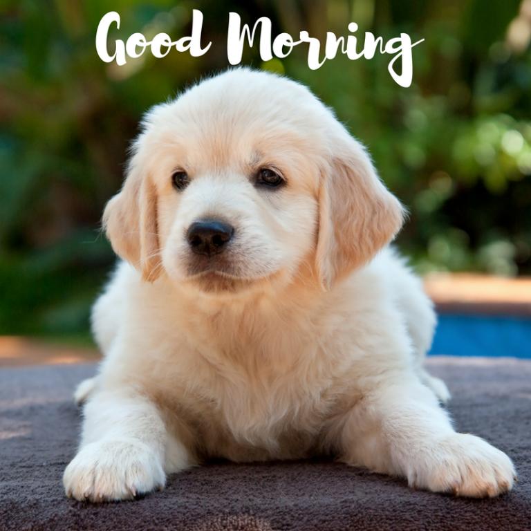 Cute Puppy Dog Pet Iphone 5s Wallpaper Download Iphone Wallpapers Ipad Wallpapers One Stop Download Cute Dog Wallpaper Dog Background Dog Wallpaper