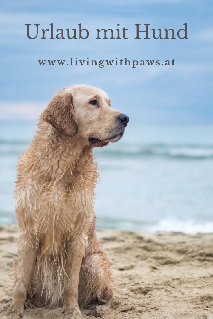 Wir Sammeln Hier Inspiration Fur Den Nachsten Urlaub Mit Hund Hunde Urlaub Mit Hund Tiere