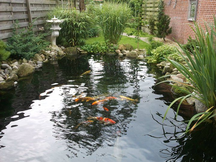 koipond | Ponds backyard, Pond water features, Fish ponds