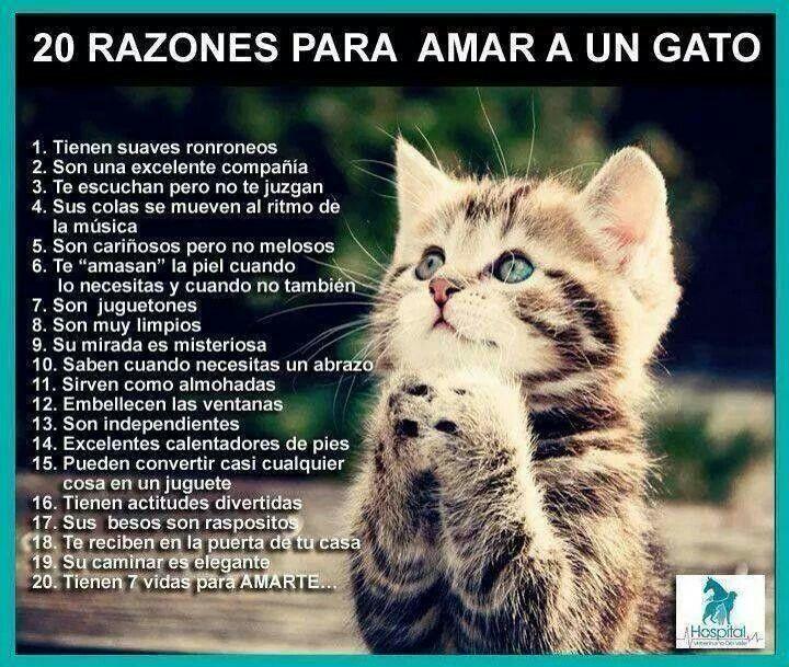 20 Razones Para Amar A Un Gato Gatitos Divertidos Gatos Humor De Gatos