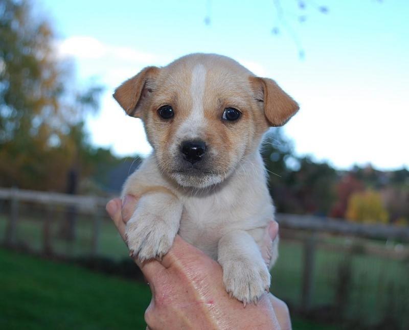 Adopt John Adoption Pending On Petfinder Terrier Mix Dogs Adoption German Shepherd Dogs
