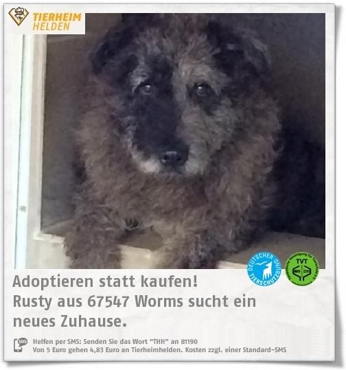 Rusty Wurde Mit 22 Anderen Hunden Aus Tierschutzwidriger Haltung