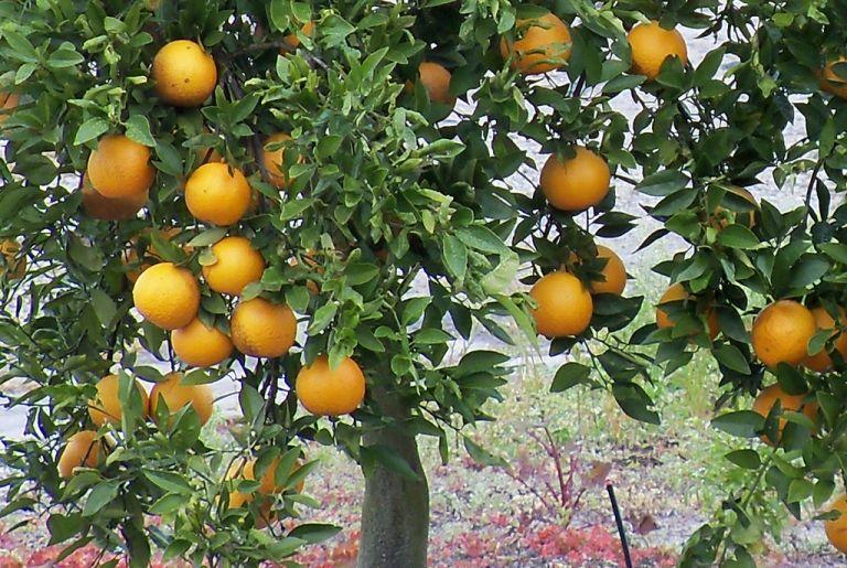 Fruit tree field day march 5 httpsloomlyzbfvnj4