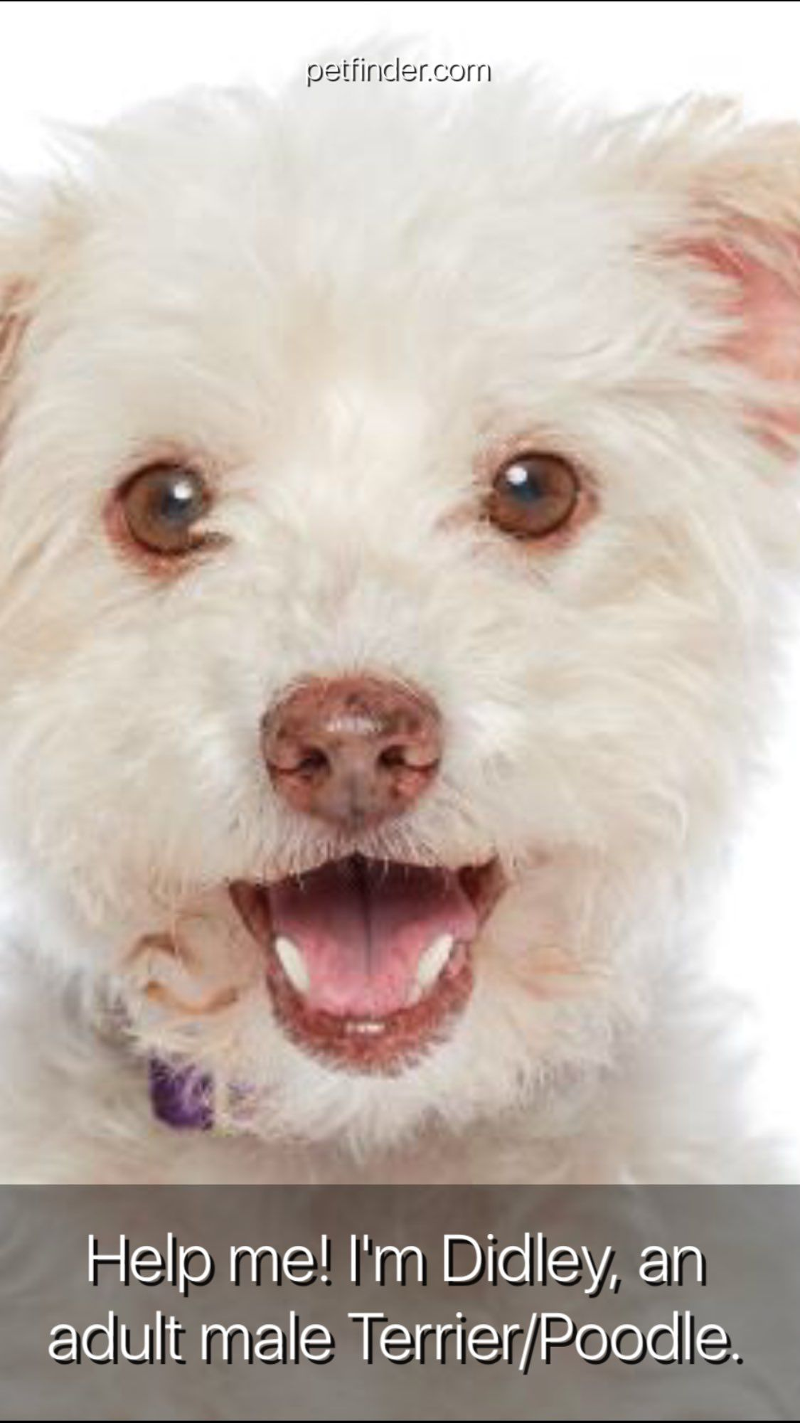 Los Angeles Dogs For You On Twitter Dogs Adoption Small Dogs