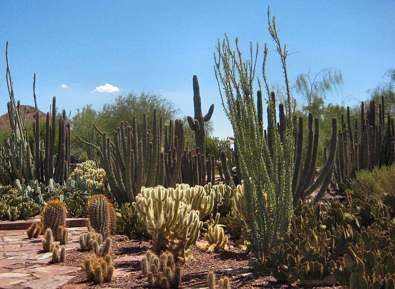 Desert Botanical Gardens, Phoenix, AZ