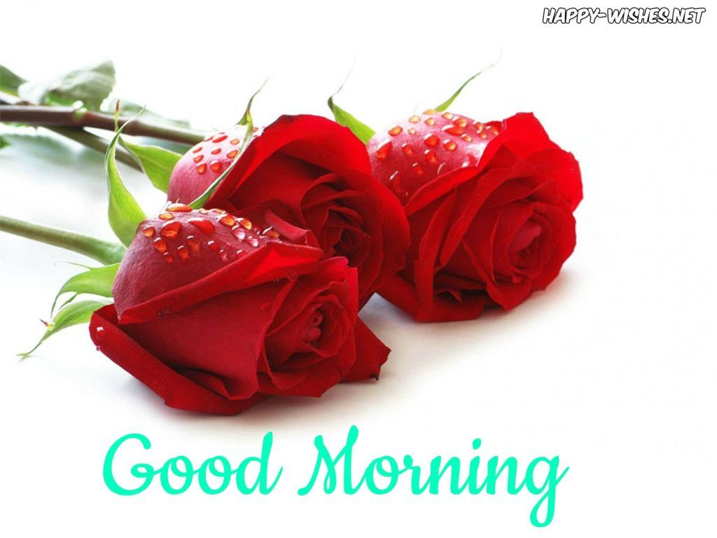 Good Morning Wishes With Red Rose Pictures Rose Flower Wallpaper Beautiful Red Roses Rose Flower Good morning red rose hd wallpaper gif