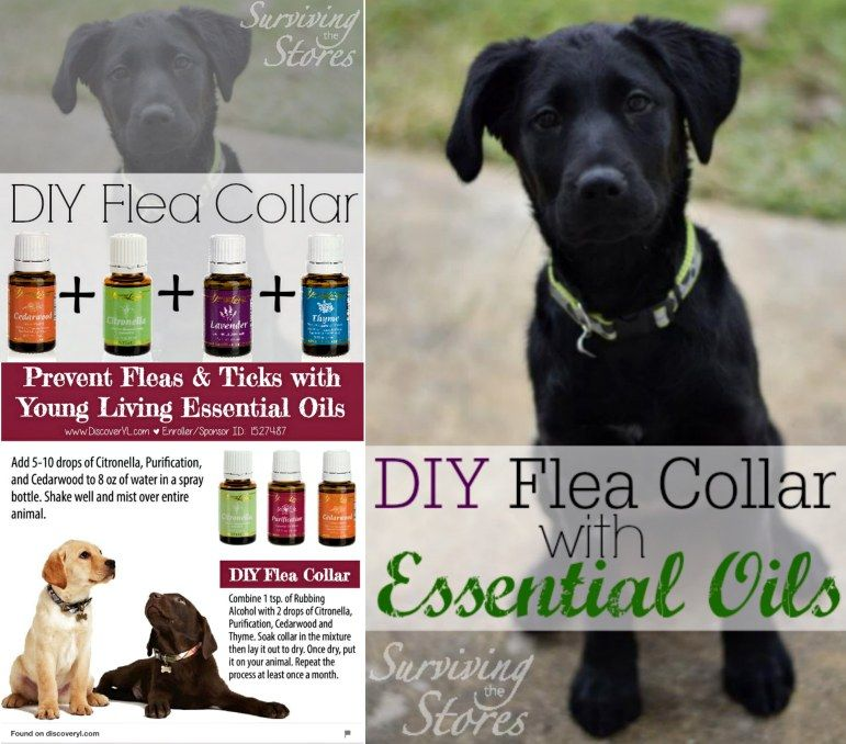 You will love this chemical free, all natural Homemade Flea Powder Baking  Soda Recipe. This traps and suffocates the fleas and gives a great result.