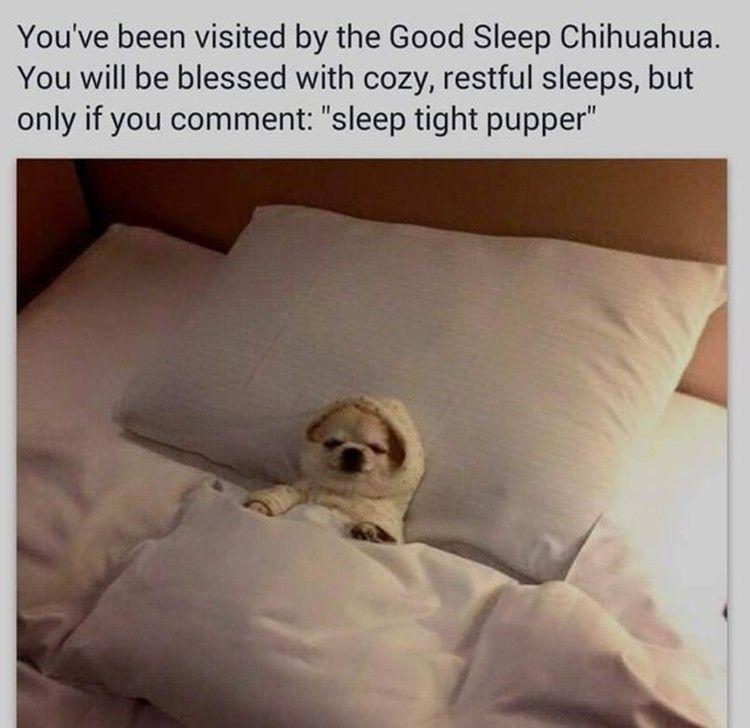 Dog memes sleep tight pupper sleep funny sleep tight