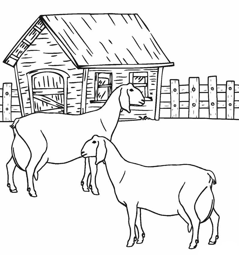 Animal Coloring Pages | Farm animal coloring pages, Animal ...
