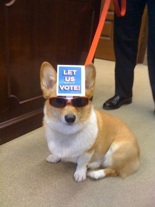Slikovni rezultat za voting time dogs