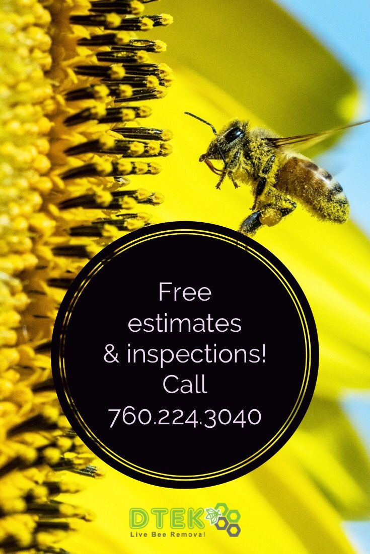 Get Help With Your Beehive Or Bee Swarm Removal Call Today For Your Free Estimate And To Schedule An Inspection 760 Bee Removal Bee How To Remove