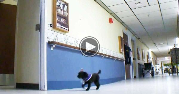 This Dog Roams Around A Nursing Home Everyday When I Saw Why I Broke Down Dog Walking Therapy Dogs Dogs