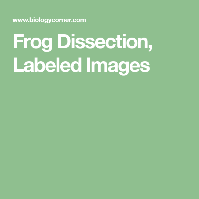 Frog Dissection, Labeled Images | Frog Dissection | Pinterest | Frogs