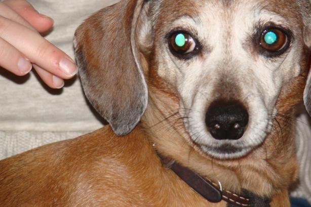 Pet Urine Remover Recipe Pet Urine Remover Urine