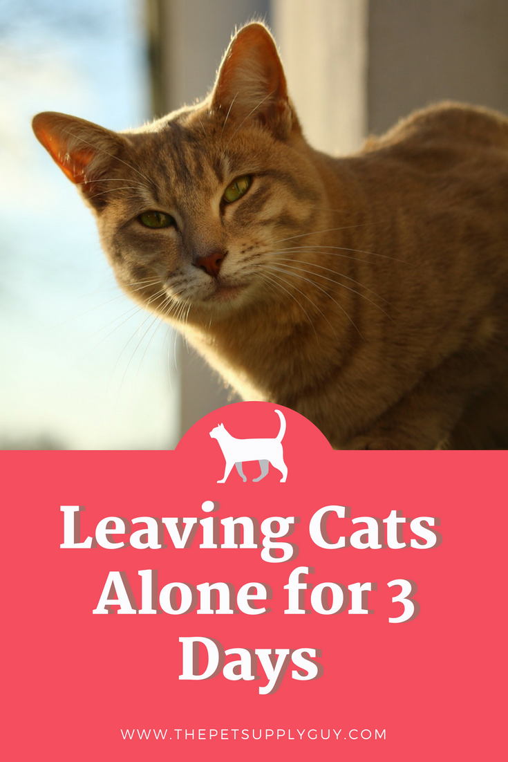 Leaving Cats Alone For 3 Days What To Know Before You Go Cats Cat Problems Cat Ages