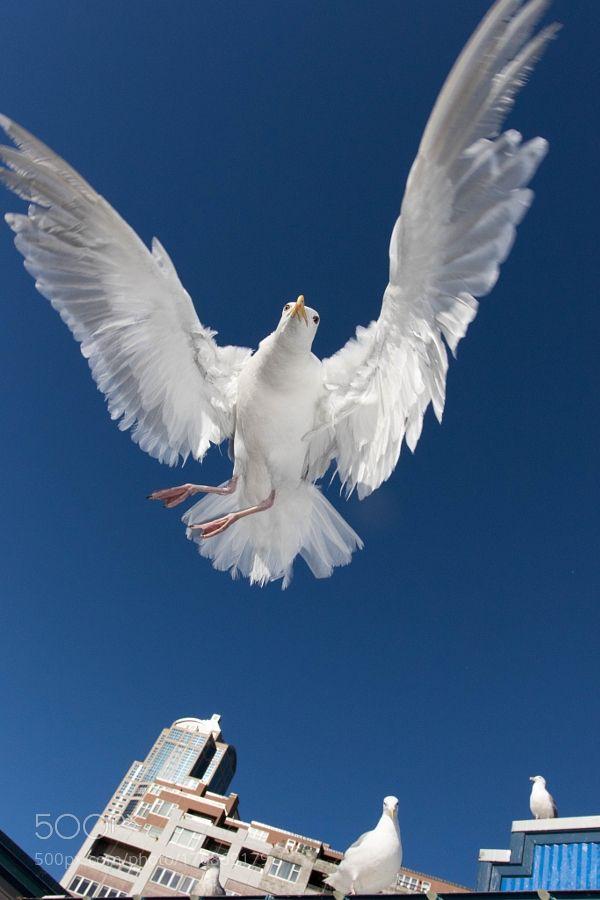 KKA by birdalicious4u