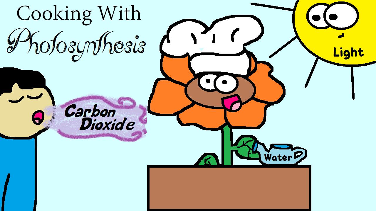 Photosynthesis needs three reactants to work water, light