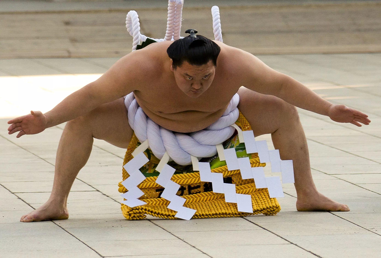 Животные мультяшные, прикольные картинки сумоистов