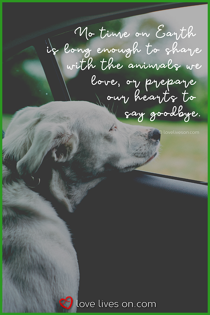 50 Beautiful Pet Loss Quotes Pet Quotes Dog Pet Loss Quotes Losing A Pet