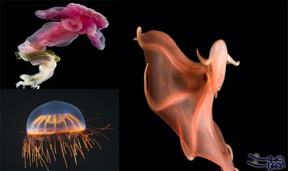 صور مذهلة تعلن عن مخلوقات جميلة وغريبة كشفت مجموعة صور مذهلة التقطتها المصور ديفيد شيل 70 عام ا على مدى عقود عن سحر المخلوقات ا Movie Posters Poster Movies