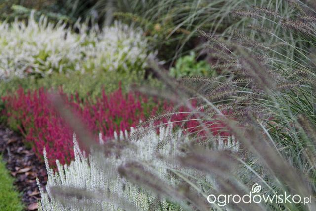 Ogród z lustrem - strona 323 - Forum ogrodnicze - Ogrodowisko