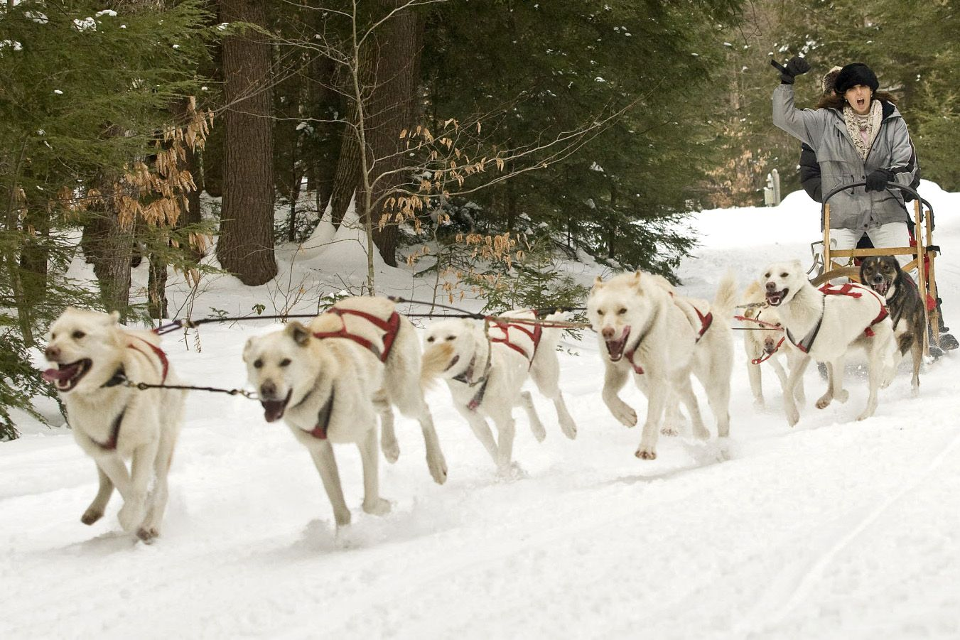 Hear The Call Of The Wild With A Sled Dog Ride With Images Dog