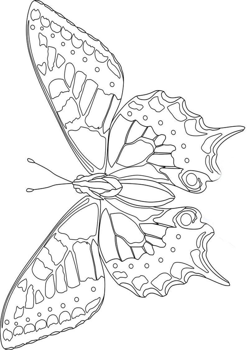 Motyle Do Kolorowania Szukaj W Google Kelebekler Mozaik Desenler