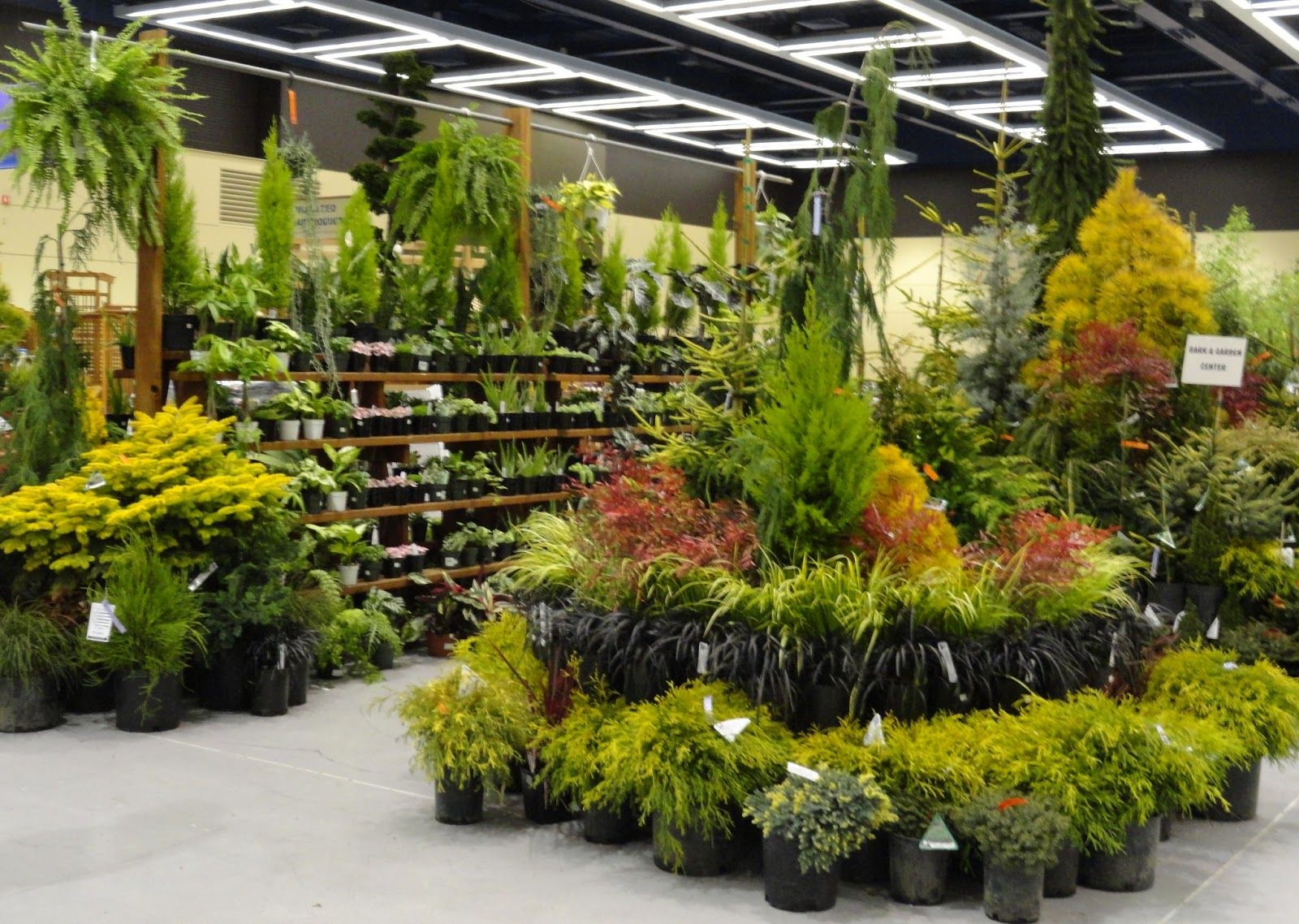 I almost bought some plants! Garden center