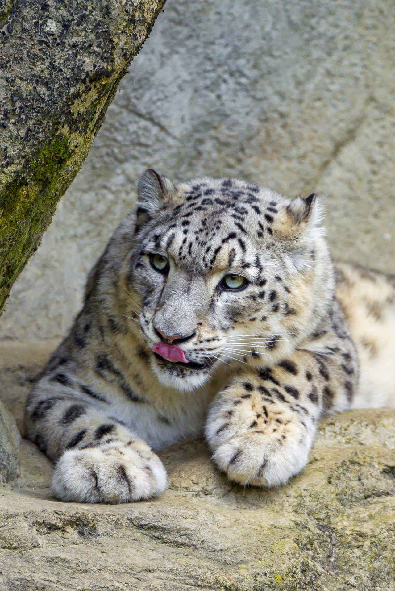 Pin by S on Animals Rare albino animals, Snow