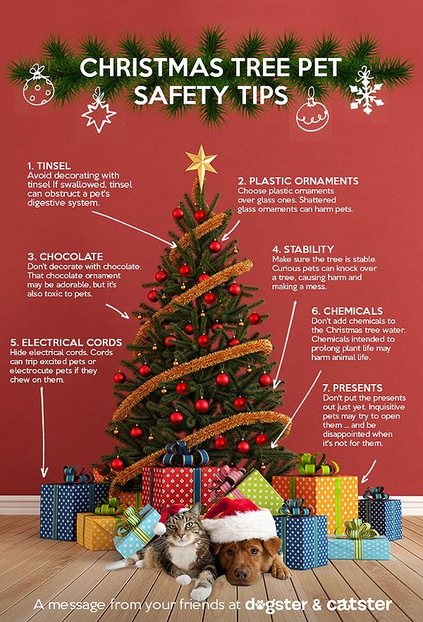 Keep your pets safe by keeping your Christmas tree safe