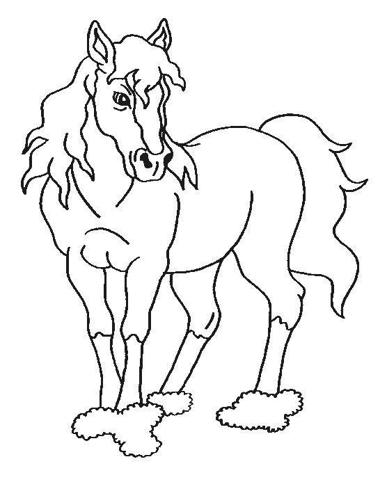 Desene De Colorat Cu Cai Moose Art Art Animals