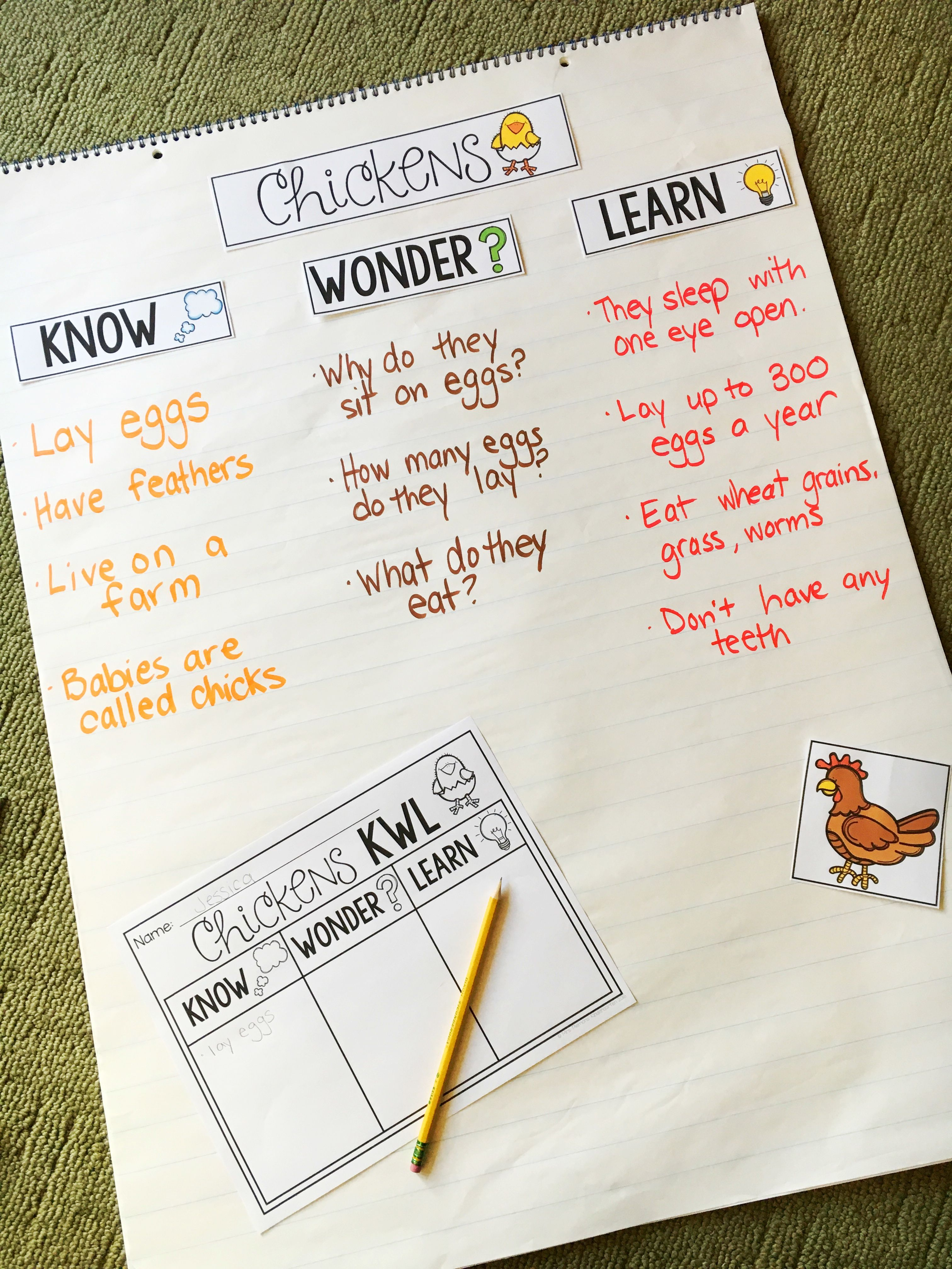 Life Cycle Of A Chicken Nonfiction Science Amp Ela Unit