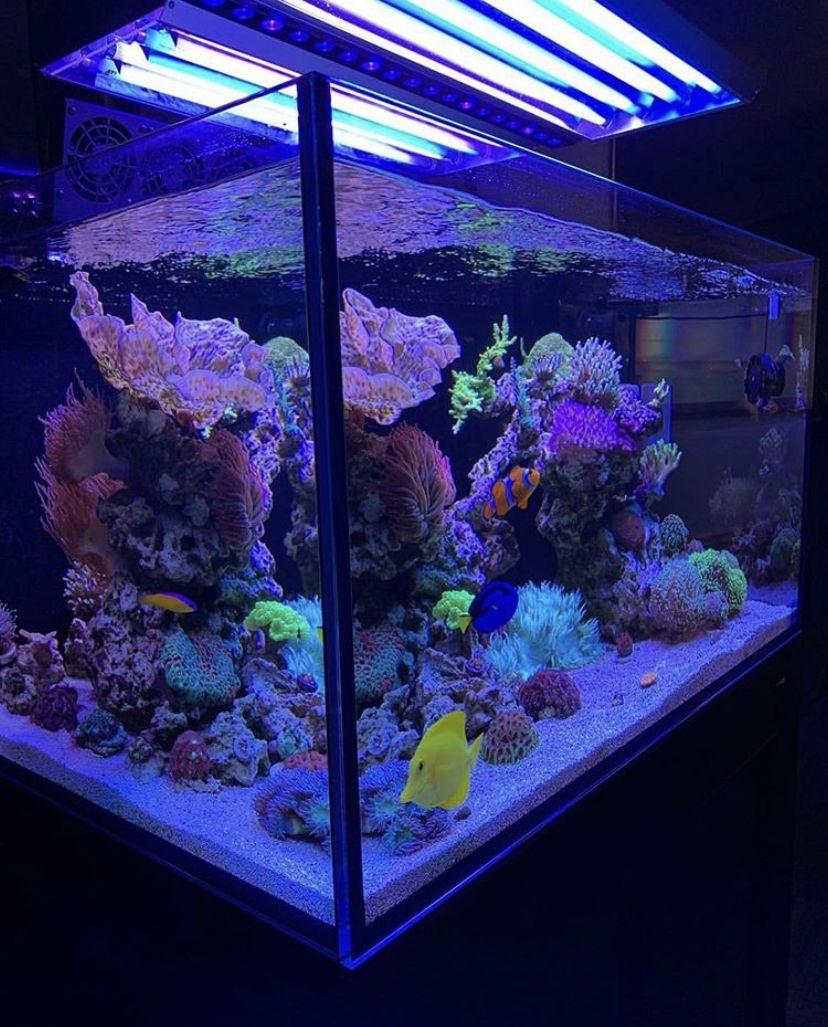history 2 orphek reef tank light