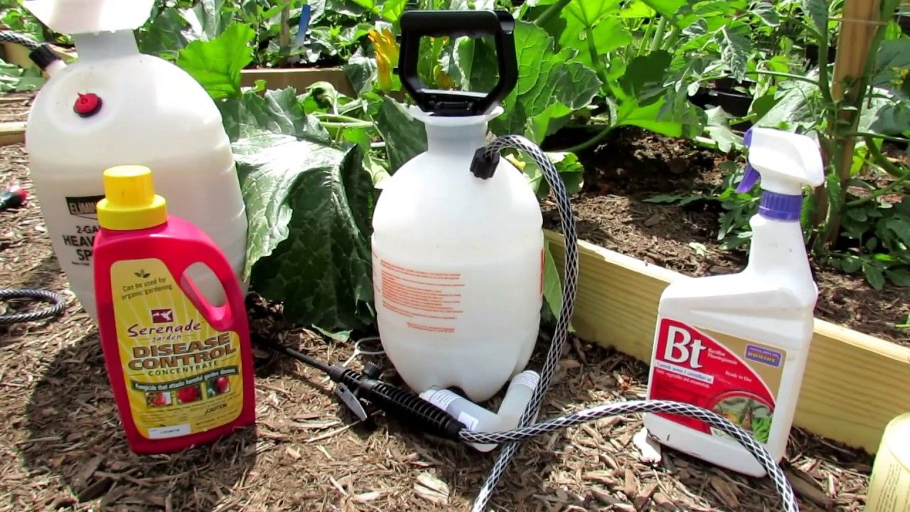 39++ Youtube how to use coffee grounds in the garden ideas in 2021