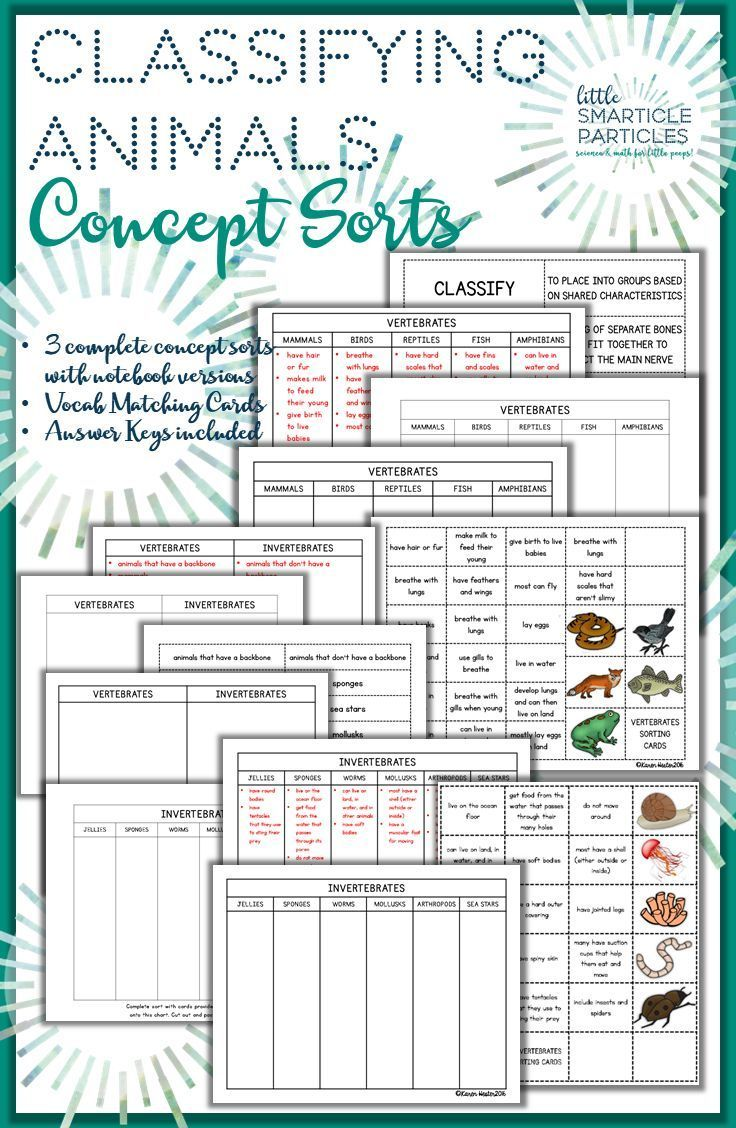 Classifying Animals Science Concept Sorts Classifying