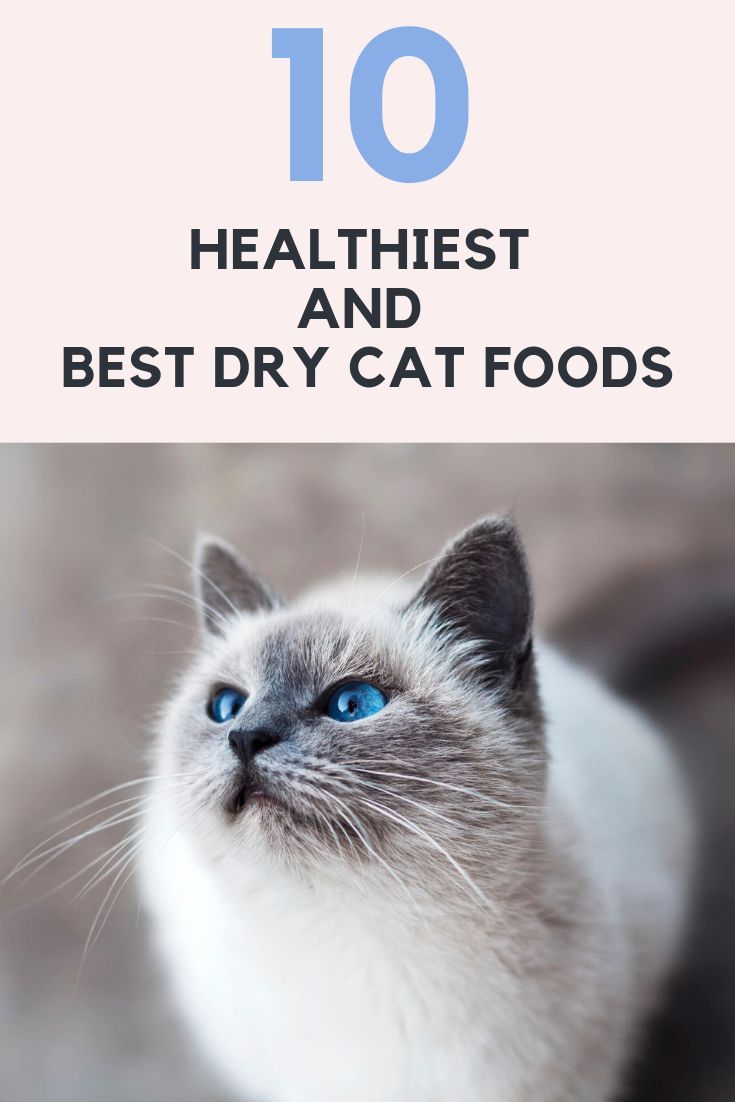 10 Healthiest and Best Dry Cat Foods Reviews with Guide