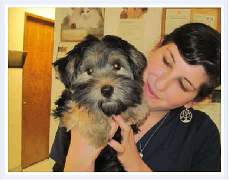Tri City Veterinary Clinic Veterinary Specialty Hospital Pet Clinic If You Live In Vista Or The Nearest In California Pet Clinic Animal Hospital Veterinary