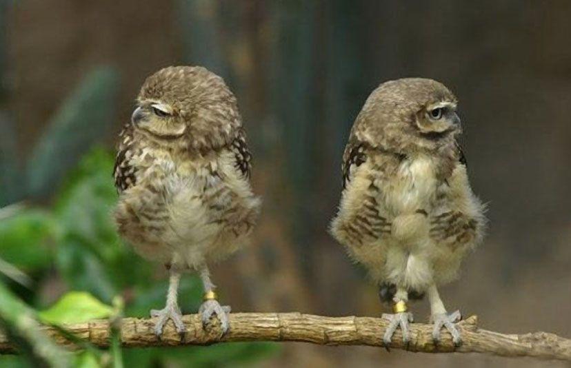 Bird babies.