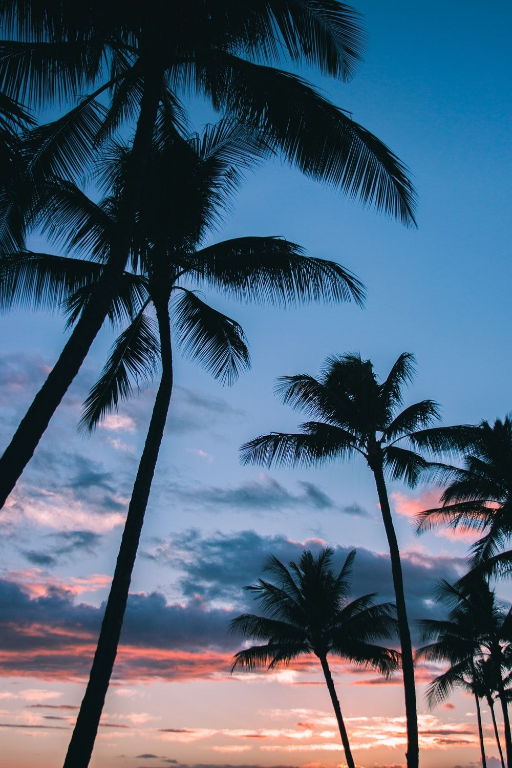 Low Angle Photography Of Coconut Trees Tree Wallpaper Iphone