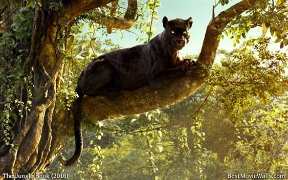The gorgeous # Bagheera from #TheJungleBook :] | Jungle
