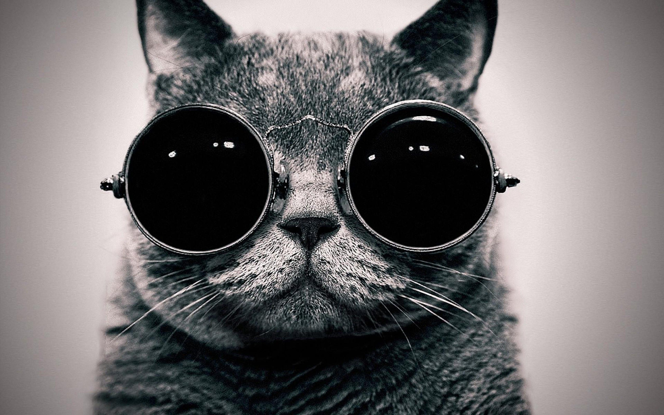 Cute Cat With Sunglasses Hd Wallpapers Image Hd Wallpapers Image