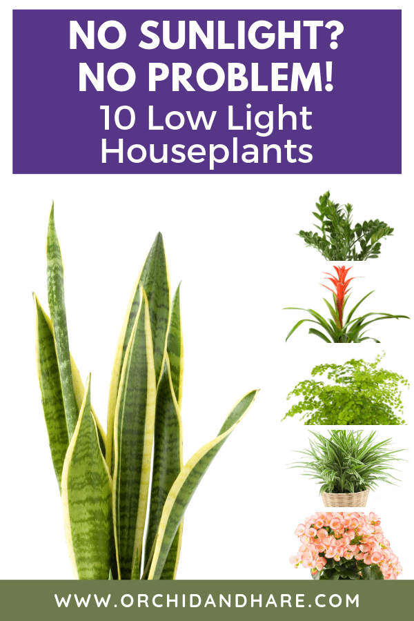 10 Best House Plants For Dark Rooms Find Out Which Are The Best Indoor Plants For Low Light Condition In 2020 Low Light House Plants House Plants Indoor House Plants