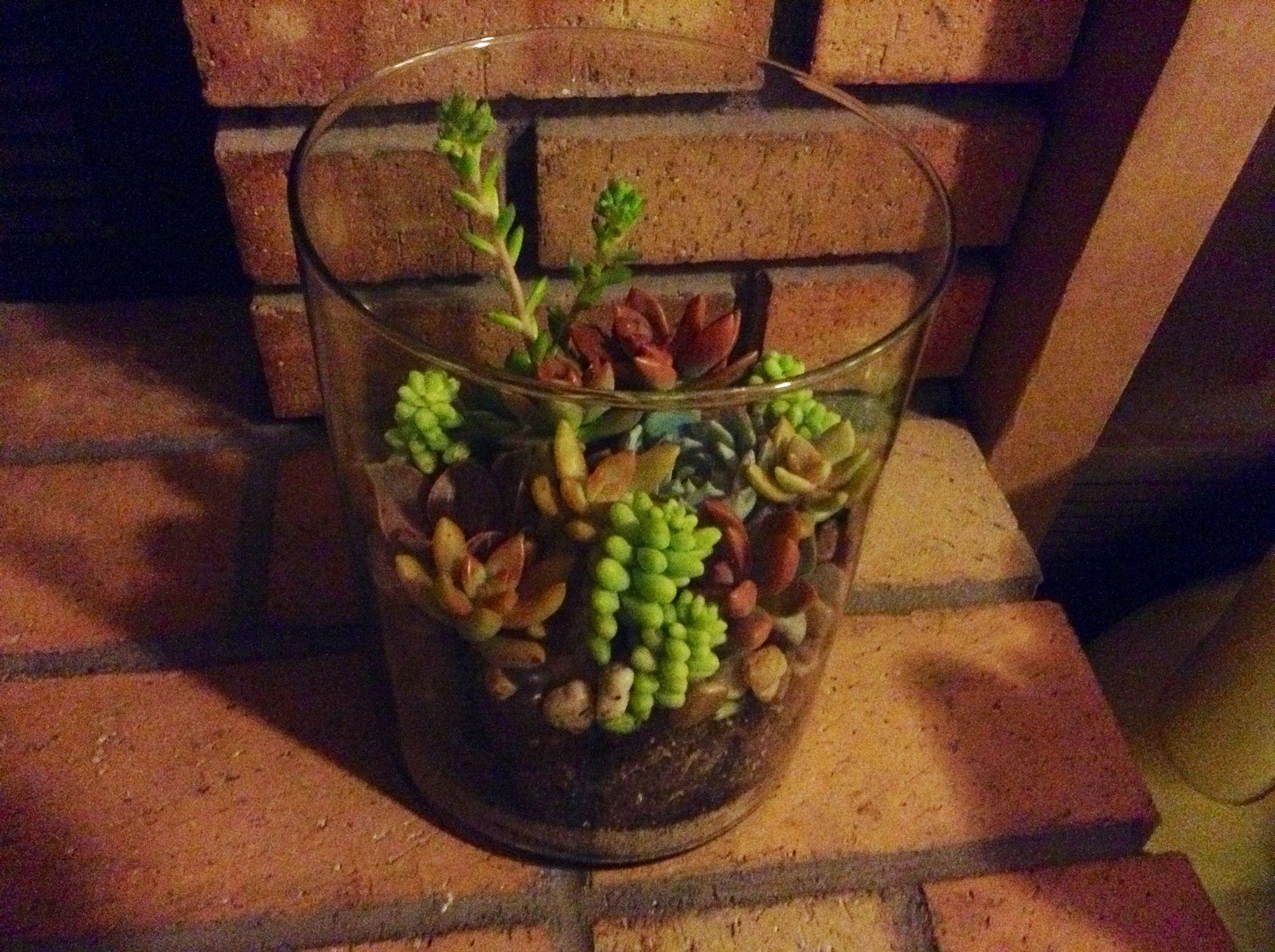 Walmart succulents $8:) | Plants and Garden | Pinterest | Plants and ...