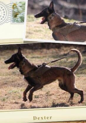 Lostdog 4 12 14 Cunningham Tn Clarksville Fortcampbell