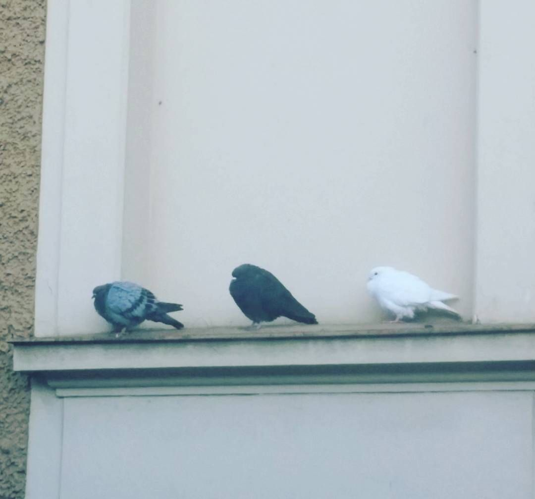 #bird #family  black & white = grey