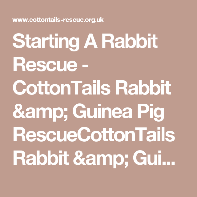 Starting A Rabbit Rescue - CottonTails Rabbit & Guinea Pig RescueCottonTails Rabbit & Guinea Pig Rescue