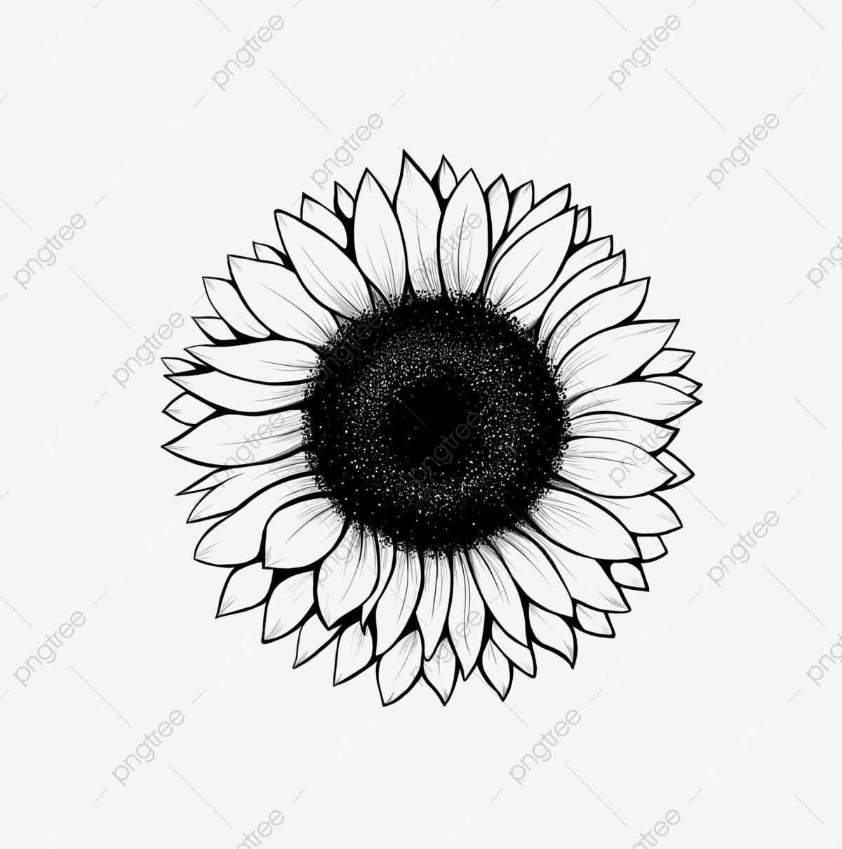 خط عباد الشمس الرسم دوار الشمس شمس زهرة Png وملف Psd للتحميل مجانا Ilustracao De Girassol Tatuagens De Girassol Desenho Do Girassol