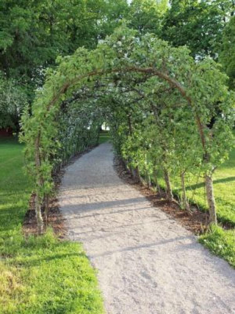 nice long driveway landscaping