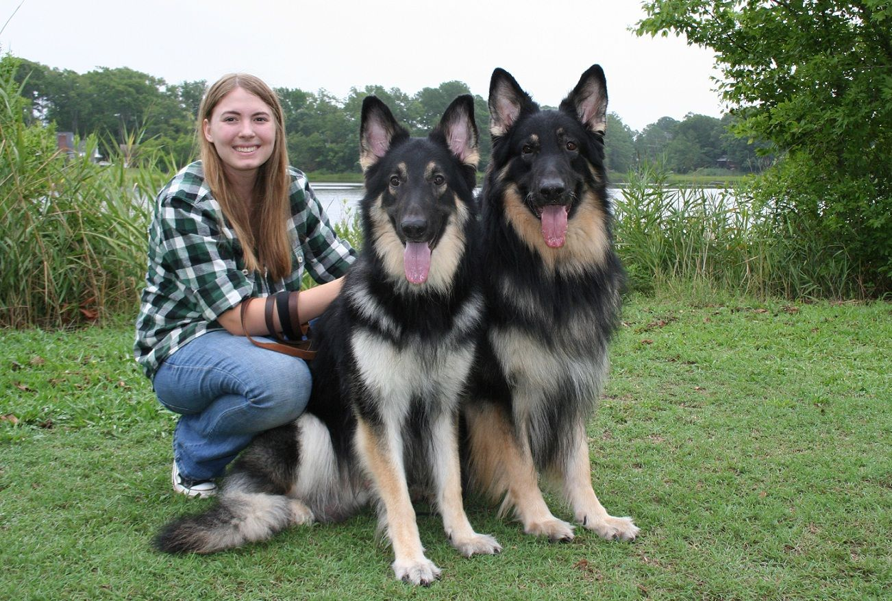 Welcome To Xanadu Home Of Our Shiloh Shepherds Alaskan Malamute