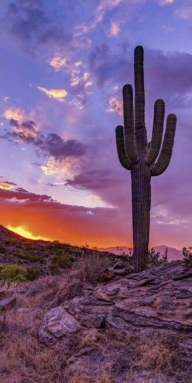 Sunset in Saguaro National Park, Arizona [OC] [2018x4012]